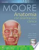 libro Anatoma Con Orientacin Clnica/ Anatomy With Clinical Orientation