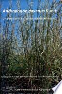 libro Andropogon Gayanus Kunth: Un Pasto Para Los Suelos ácidos Del Trópico