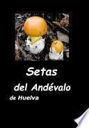 libro Setas Del Andévalo De Huelva
